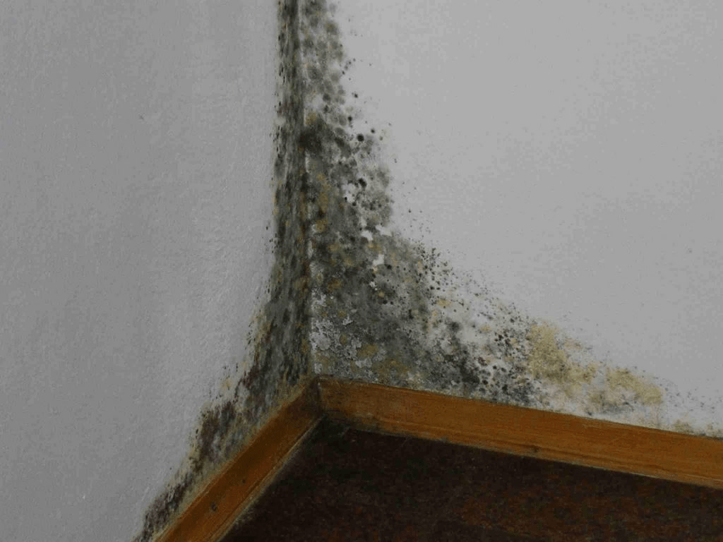 mould-removal-min